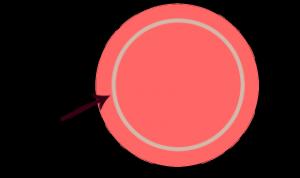 stor cirkel